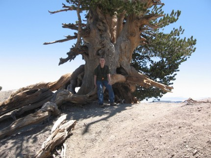 Jacob and the 1,500 year old tree