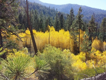 Aspen Groves - San Gorgonio Wilderness